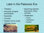 later in the paleozoic era