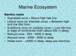 marine ecosystem16