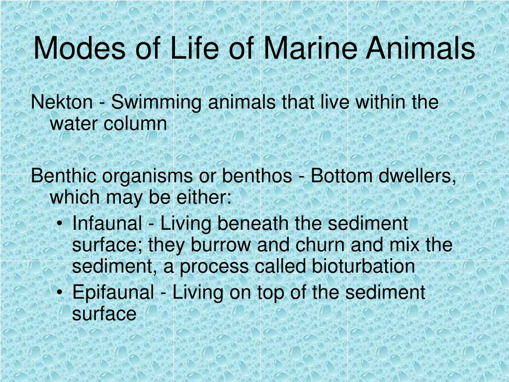 Modes of Life of Marine Animals