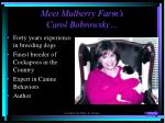 meet mulberry farm s carol bobrowsky