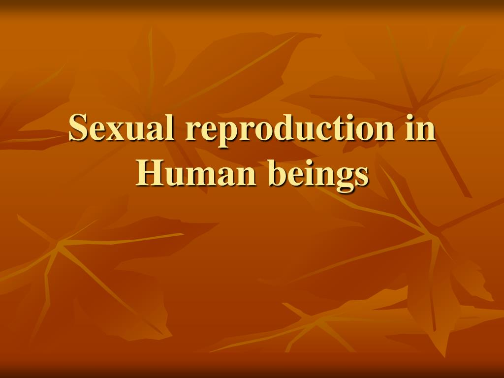 sexual reproduction in human beings l.