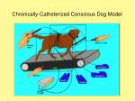 chronically catheterized conscious dog model