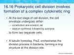 16 16 prokaryotic cell division involves formation of a complex cytokinetic ring