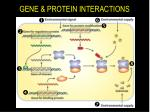 gene protein interactions28