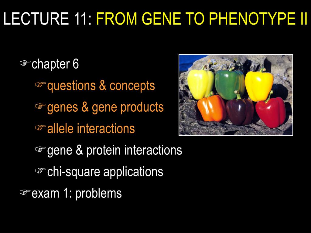 lecture 11 from gene to phenotype ii l.