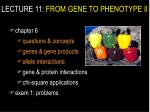 lecture 11 from gene to phenotype ii