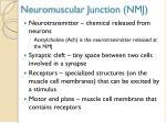 neuromuscular junction nmj