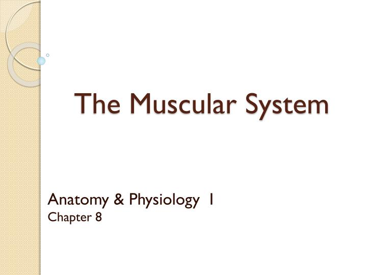 PPT - The Muscular System PowerPoint Presentation - ID:213799