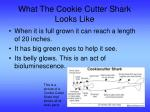 what the cookie cutter shark looks like