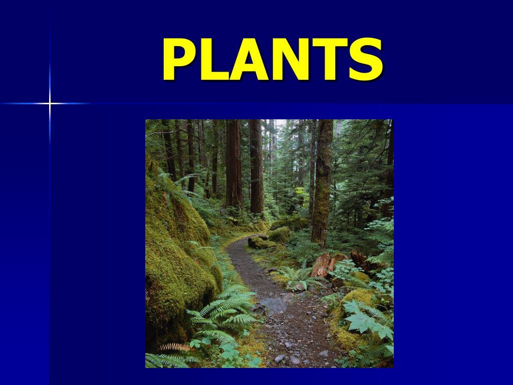plants l.