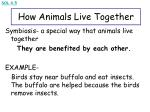 how animals live together