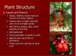 plant structure6