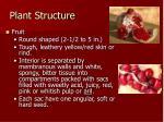 plant structure7