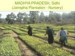 madhya pradesh sidhi jatropha plantation nursery