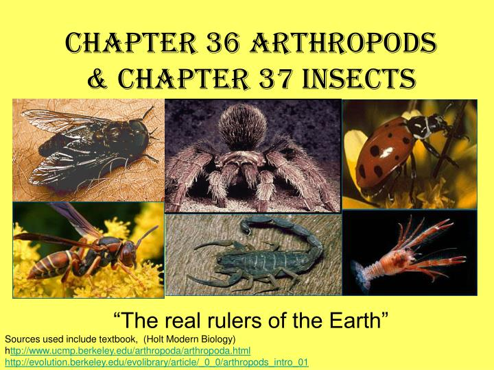 chapter 36 arthropods chapter 37 insects n.