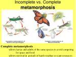 incomplete vs complete metamorphosis