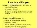 insects and people