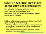 spiders a full facial view of any spider shows its killing ability