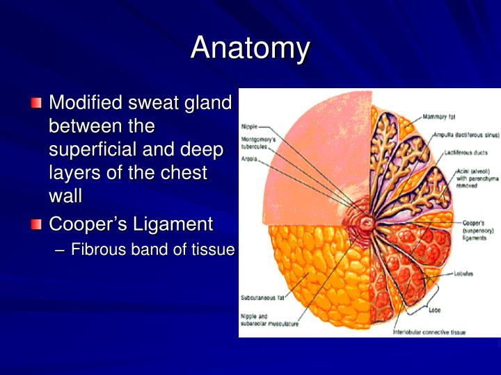 Ppt Benign Breast Disease Powerpoint Presentation Free Download
