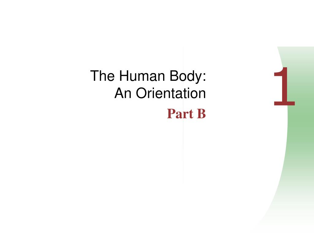 the human body an orientation part b l.