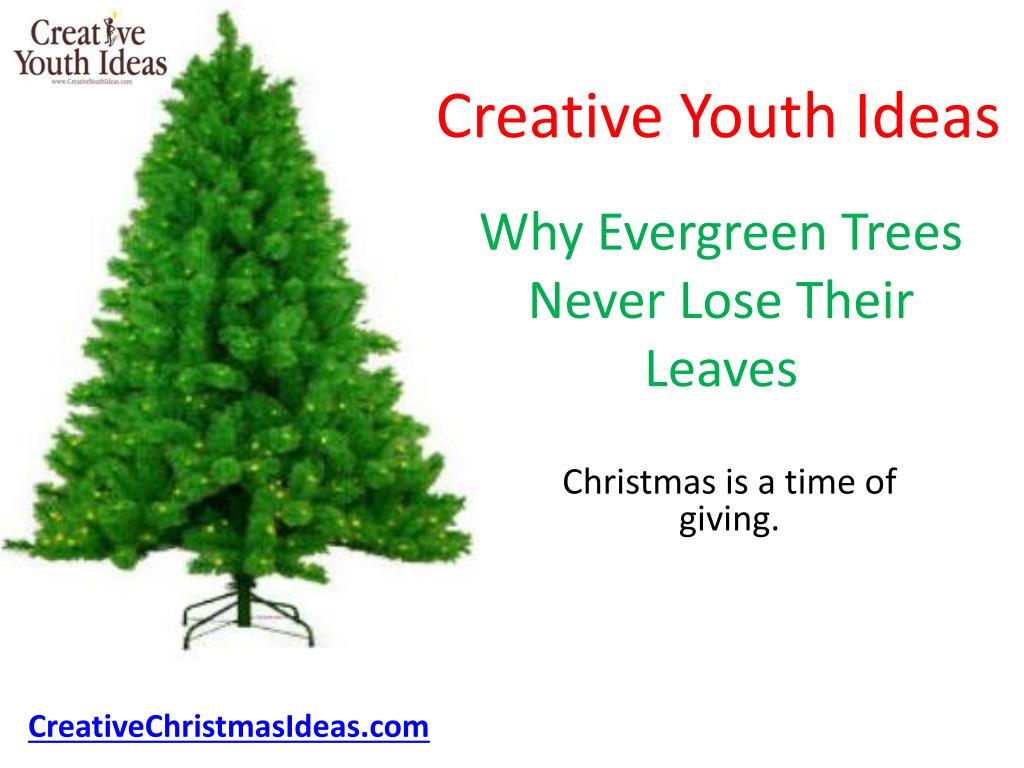 why evergreen trees never lose their leaves l.
