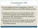 transpeptidase pbp