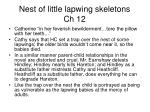 nest of little lapwing skeletons ch 12