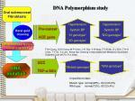 dna polymorphism study