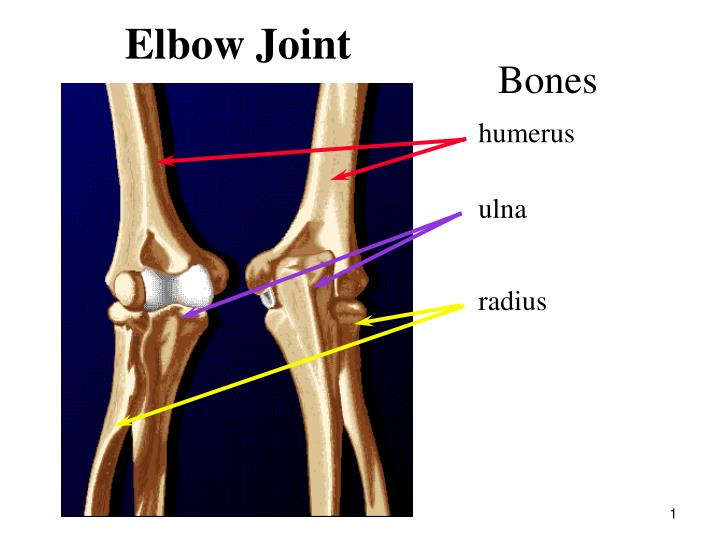 Ppt Elbow Joint Powerpoint Presentation Id216026