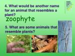 4 what would be another name for an animal that resembles a plant