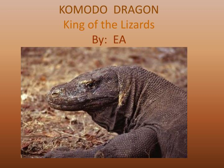 komodo dragon king of the lizards by ea n.