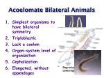 acoelomate bilateral animals4