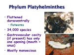 phylum platyhelminthes18