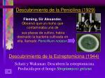 descubrimiento de la penicilina 1929