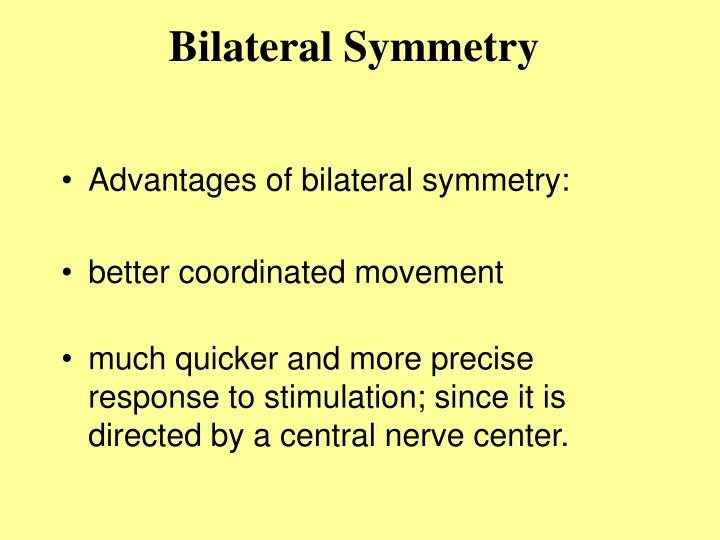 Bilateral symmetry3