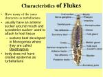 characteristics of flukes