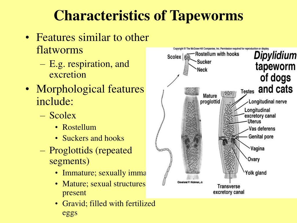 Characteristics of Tapeworms