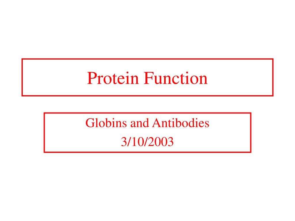 protein function l.