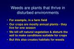 weeds are plants that thrive in disturbed environments