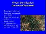 weed identification common chickweed
