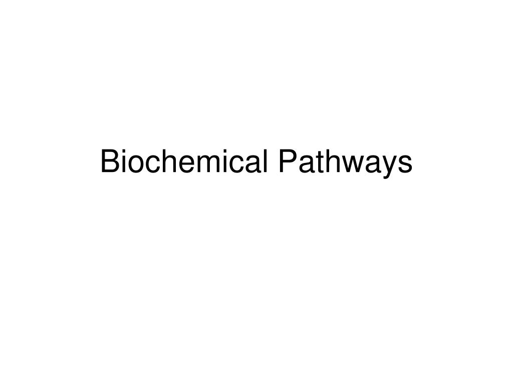 biochemical pathways l.