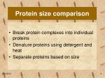 protein size comparison