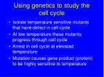 using genetics to study the cell cycle21