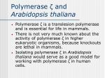 polymerase and arabidopsis thaliana