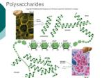 polysaccharides8
