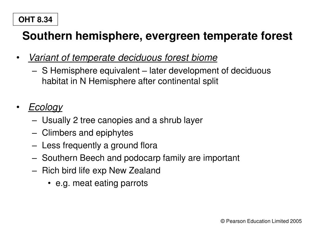 Southern hemisphere, evergreen temperate forest