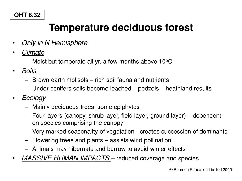 Temperature deciduous forest