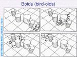 boids bird oids55