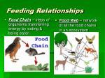 feeding relationships