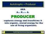 autotrophs producer